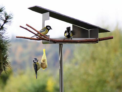 Cabane-snack à oiseaux